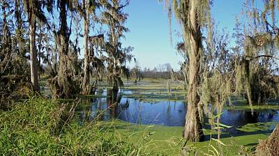Photograph - A Winter Day In Heavenly Central Florida by Carol Bradley