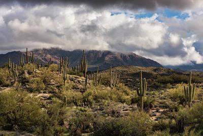 Photograph - A Winter Day In The Sonoran Desert  by Saija Lehtonen