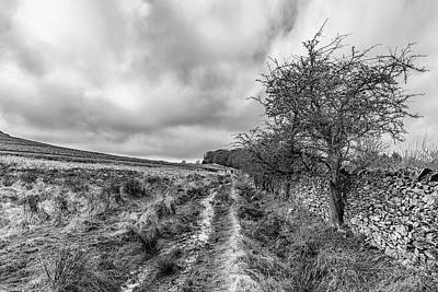 Photograph - A Winter Track by Nick Bywater