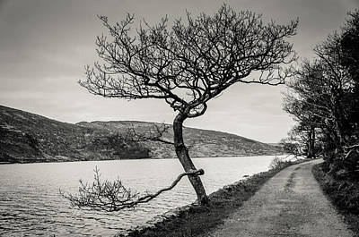 Photograph - A Winter Tree by Martina Fagan