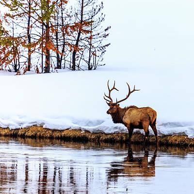 Photograph - A Winter Wade by Robert Caddy