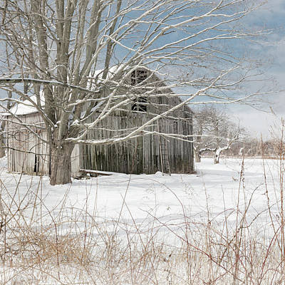 Photograph - A Winters Day Square by Bill Wakeley