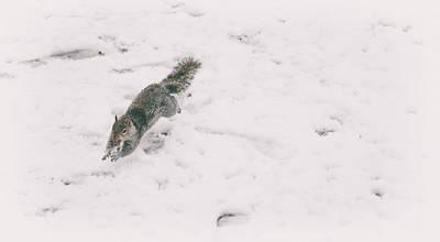 Chipmunk Photograph - A Winters Jump by Martin Newman
