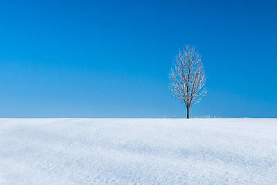 Christmas Holiday Scenery Photograph - A Winter's Landmark by Todd Klassy