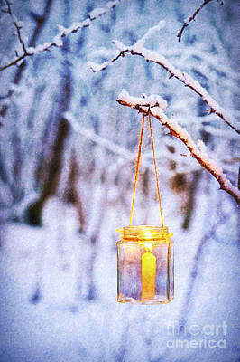 Photograph - A Winters Tale by Tim Gainey