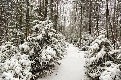 Photograph - A Winters Walk by Karin Pinkham