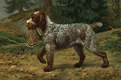 Artist Working Photograph - A Wire-haired Pointing Griffon Holds by Walter A. Weber