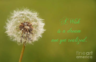 Photograph - A Wish by Traci Law