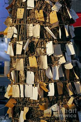 Photograph - A Wishing Tree With Many Requests by Yali Shi