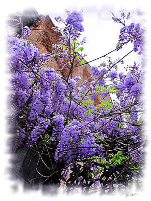 Photograph - A Wisteria Walk In Charleston by Joan  Minchak