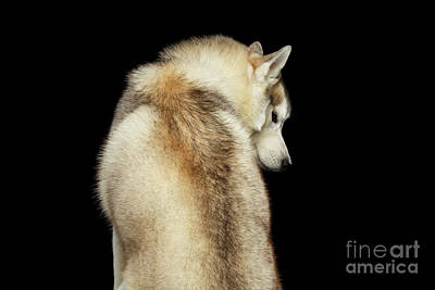 Photograph - A Wolf In The Soul by Sergey Taran