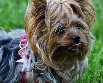 Photograph - A Wonderful Dog by Vadim Levin