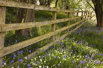Photograph - A Wooden Fence In A Forested Area With by John Short