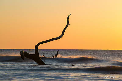 Photograph - I See A Wooden Sea Creature by Walt  Baker