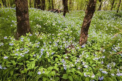 Photograph - A Woodland Carpet Of Blue by Scott Bean