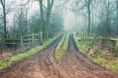 A Woodland Path Art Print by Tom Gowanlock