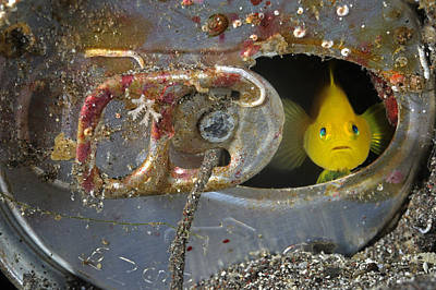 Hiding Photograph - A Yellow Goby Peers Through The Window by Brian J. Skerry