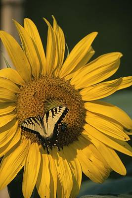 Garden Scene Photograph - A Yellow Swallowtail by Taylor S. Kennedy