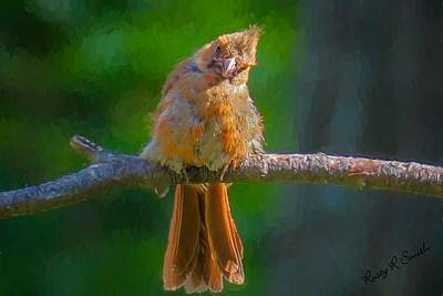 Digital Art - A Young Cardinal Perching On A Branch. by Rusty R Smith