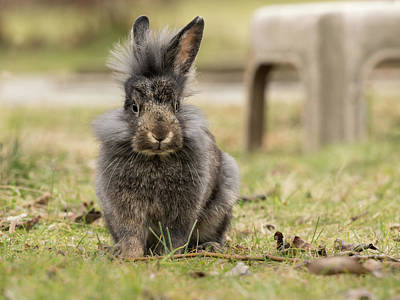 Keith Richards - A young dwarf rabbit sitting in the grass by Stefan Rotter