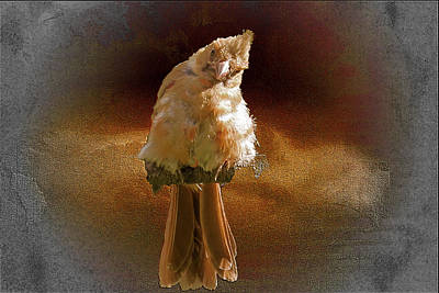 Digital Art - A Young Fuzzy Cardinal. by Rusty R Smith