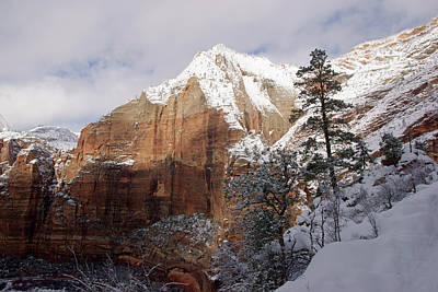 Photograph - A Zion View Along The Trail by Daniel Woodrum