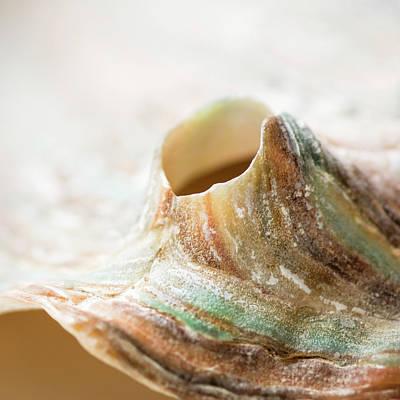 Photograph - Abalone Landscape by Heather Applegate