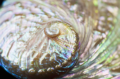 Photograph - Abalone Shell Close-up by Bill Brennan - Printscapes