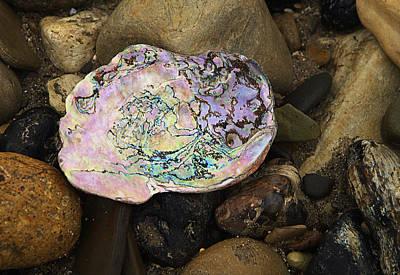 Abalone Wall Art - Photograph - Abalone Shell by Ron Regalado