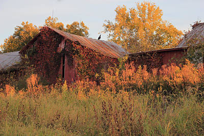 Photograph - Abandoned Barn by Angela Murdock