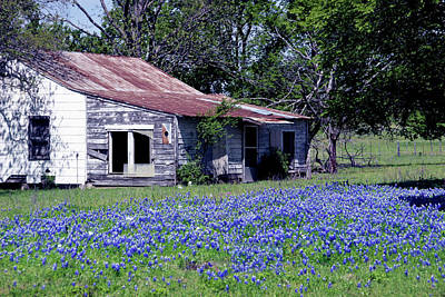 Photograph - Abandoned Bluebonnets by Robert Camp