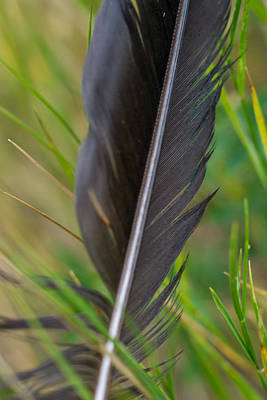 Photograph - Abandoned Feather by Dwayne Schnell