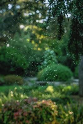 Photograph - Morning Web by Gene Garnace