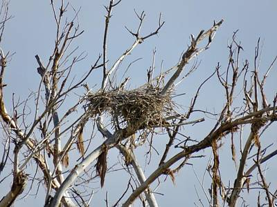 Photograph - Abandoned Heron's Nest by Judy Kennedy