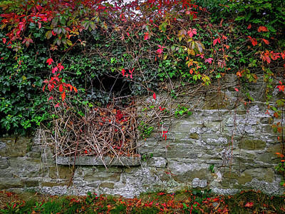 Photograph - Abandoned Irish Cottage In Autumn by James Truett