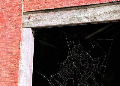 Photograph - Abandoned Web by JAMART Photography