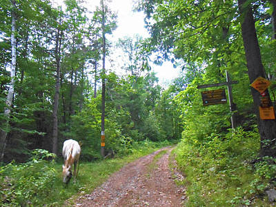 Paso Fino Stallion Photograph - Abandoned Road Scenic by Patricia Keller