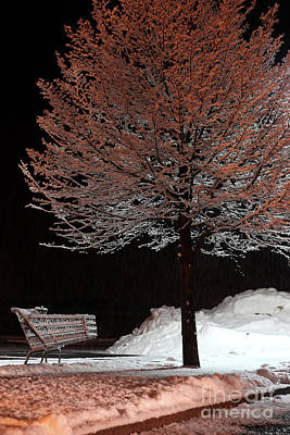 Photograph - Abandoned shopping cart and tree frosted with snow by Doug Moore