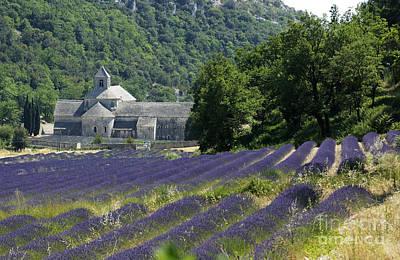 Provence Photograph - Abbaye Of Senanque. Luberon. by Bernard Jaubert