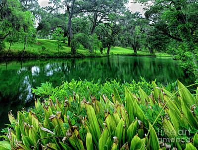 Photograph - Abbey Greens by Elvis Vaughn