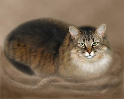 Tabbies Digital Art - Abby by Barbara Hymer
