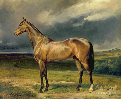 Racehorse Painting - Abdul Medschid The Chestnut Arab Horse by Carl Constantin Steffeck
