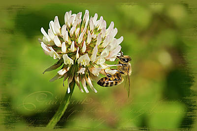 Photograph - Abeille by Patricia Montgomery