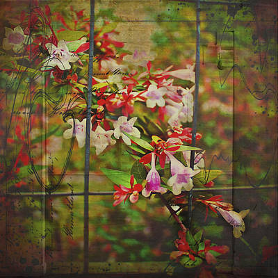 Photograph - Abelia Coming Through by Bellesouth Studio