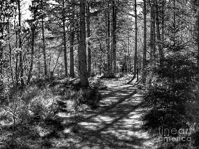 Photograph - Abernethy Pinewood Forest In Monochrome by Joan-Violet Stretch