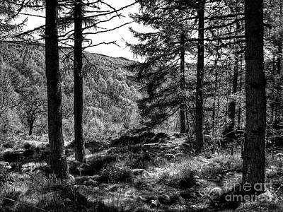 Photograph - Abernethy Pinewood Forest In Monochrome 2 by Joan-Violet Stretch