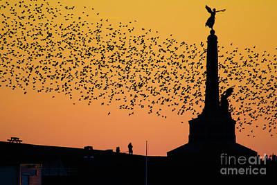Aberystwyth Starlings Art Print by Keith Morris