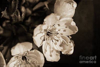 Art Print featuring the photograph Abiding Elegance by Linda Lees