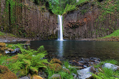 Photograph - Abiqua Falls In Summer by David Gn