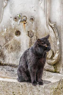 Ablution Taps Kitty Art Print by Antony McAulay